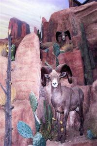 carlson2 desert sheep