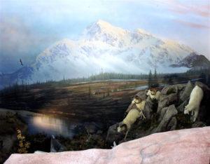 carlsonDall Sheep and Goat coming down mountain