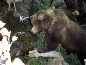carlsonGrizzley Bear