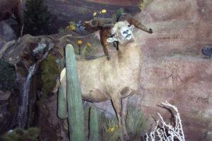 carlsonSingle desert sheep and cactus