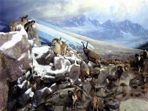 carlsonsheep on mountain - winter